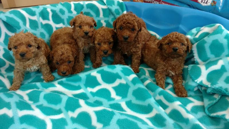 Twin Oaks Kennels Of Fredonia - Welcome to the PUPPY page!!