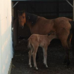 new baby colt